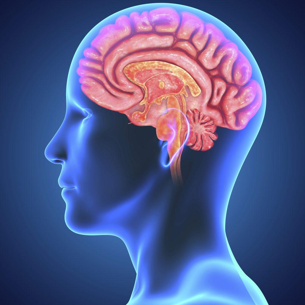 brain pocket, science news,
