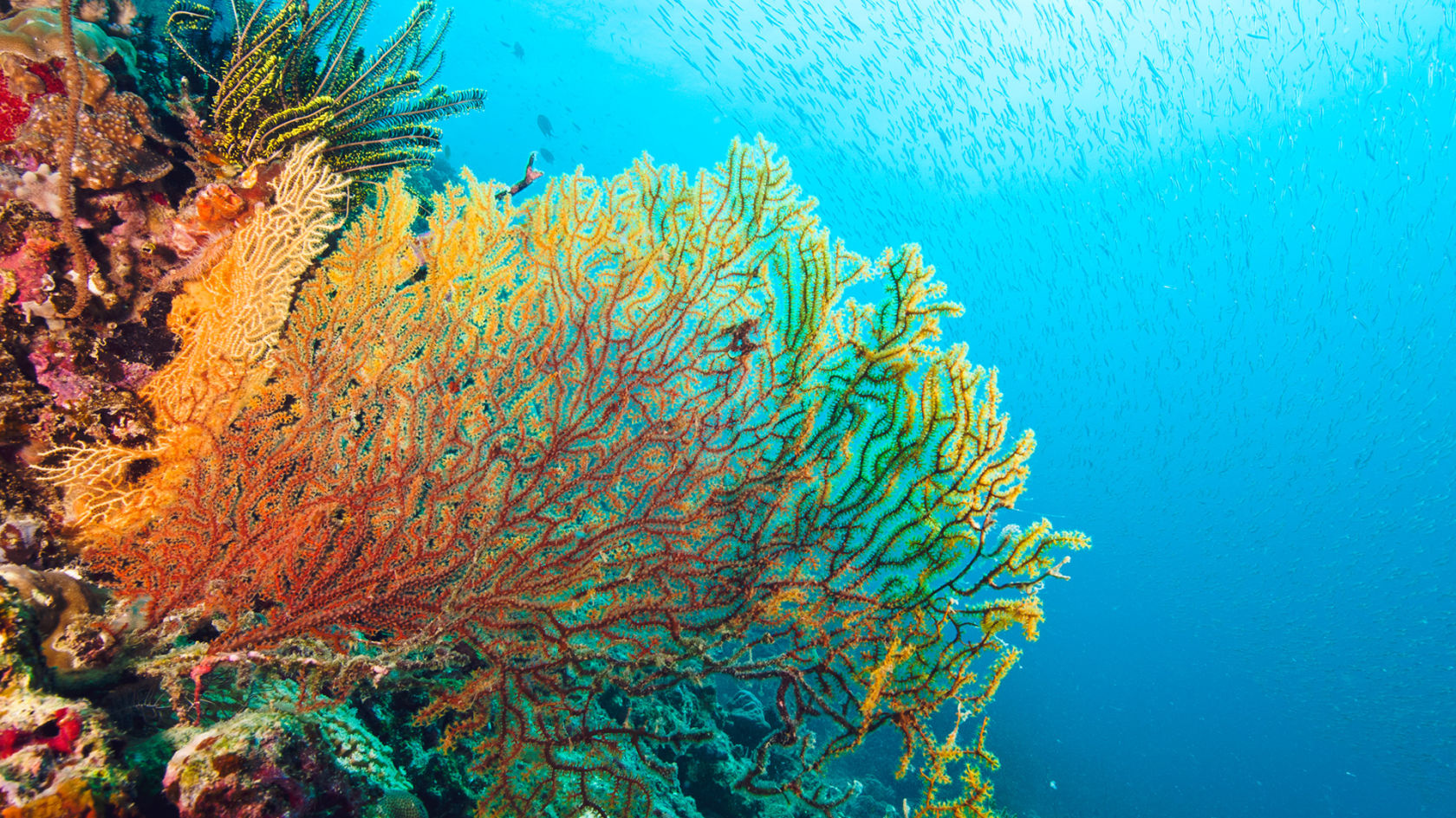 the coral reef bleaching environmental sciences essay Coral reef bleaching now threatens the survival of reefs  by jonathan amos bbc science correspondent  documents similar to coral reefs disappearing coral.