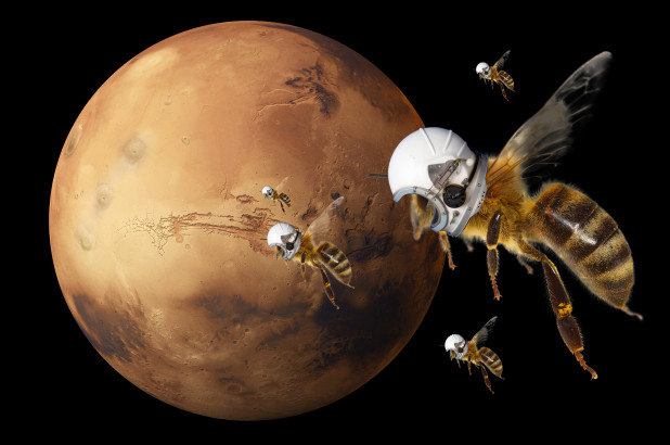 Marsbee, Mars, NASA