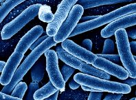 antibiotic resistance, bacteria, health