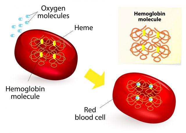 World Thalassemia Day, india