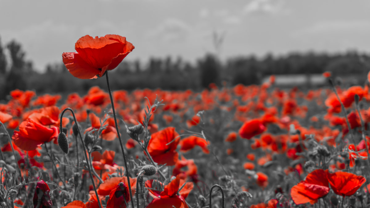 Rememberance Day 2020 Images Quotes Wishes Messages Sayings Pictures