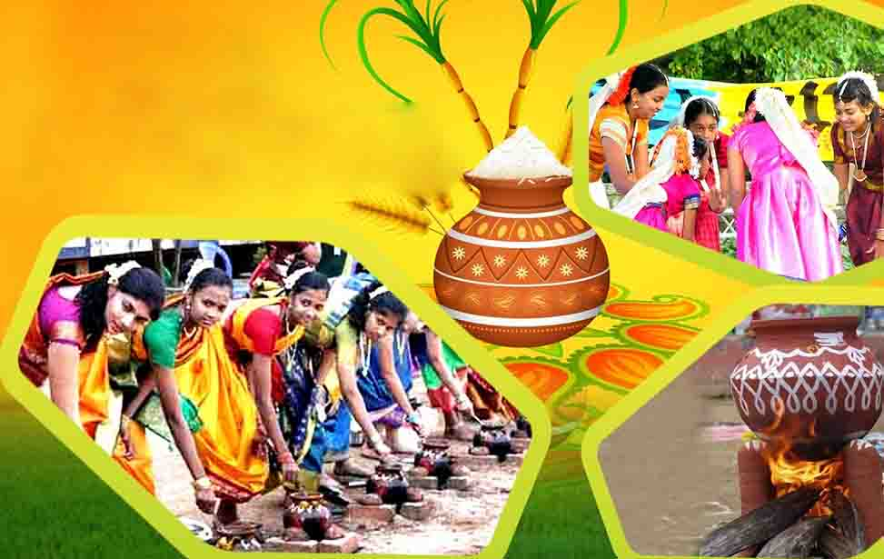 Pongal 2021 Date Significance Wishes SMS Celebration Know All The Facts